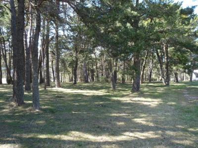 Pine de1